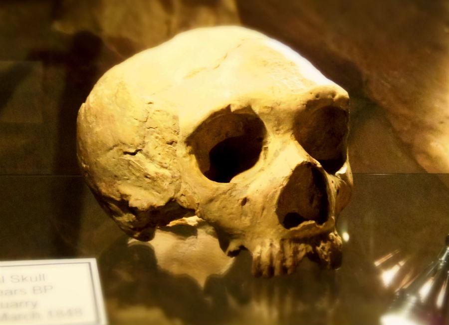 инвестиции распределяются археологические находки в пещере во франции фото моем окружении